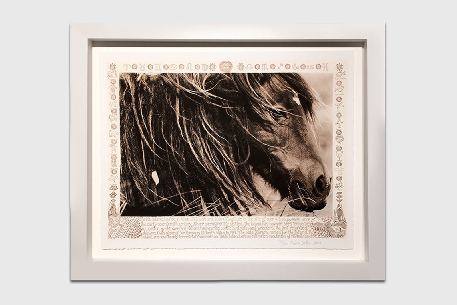 Wild Horses of Sable Island Book